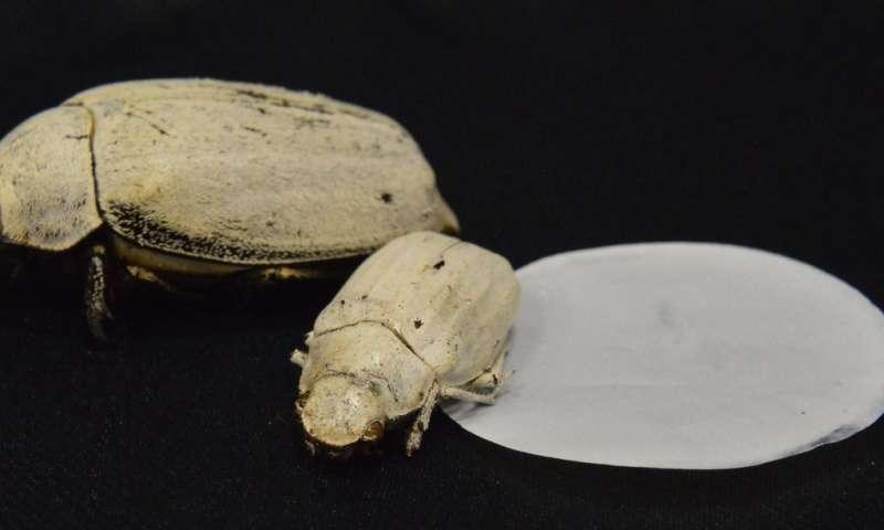 Ultra-white coating modelled on beetle scales