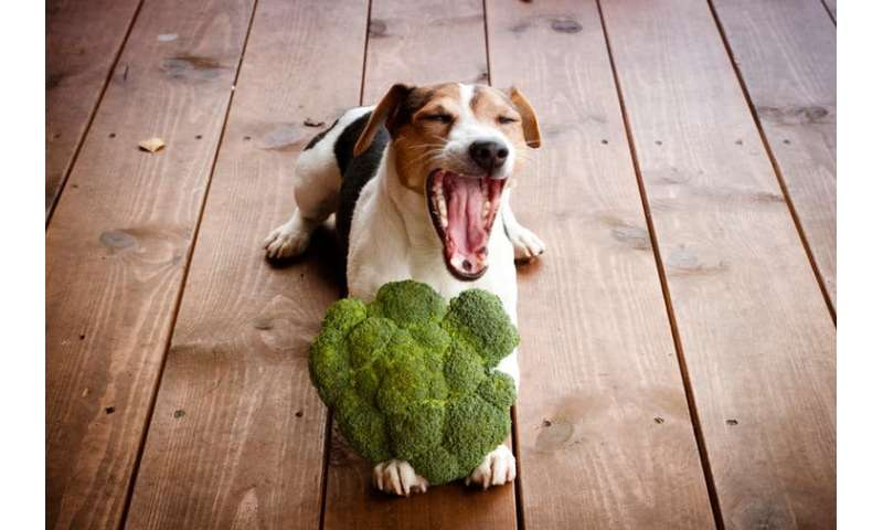 Vegan dogs: should they go meat free?