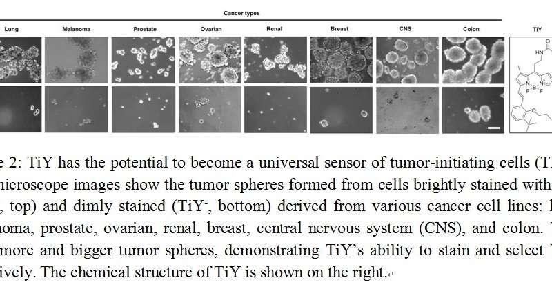 Versatile Sensor Against Tumor Initiating Cells
