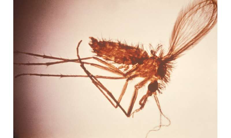 Visceral leishmaniasis on the rise in Brazil, study finds