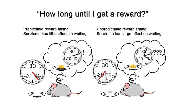 Wait for it: Serotonin and confidence at the root of patience in new study