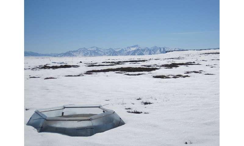 Warming alters predator-prey interactions in the Arctic