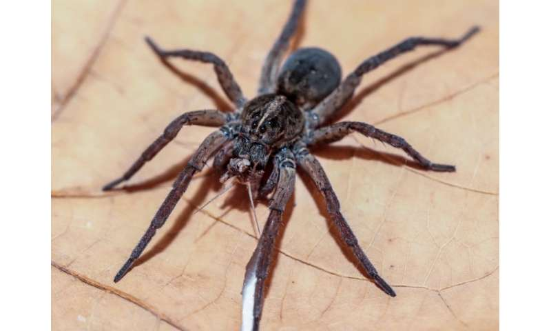 What's a spider's favorite color? Study finds surprising answers