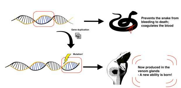 Why are some animals venomous?
