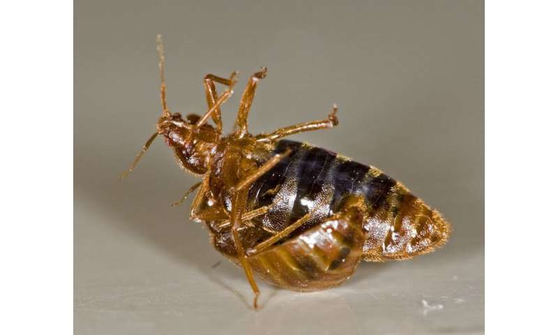 Why homosexual behaviour in insects may be a case of mistaken identity
