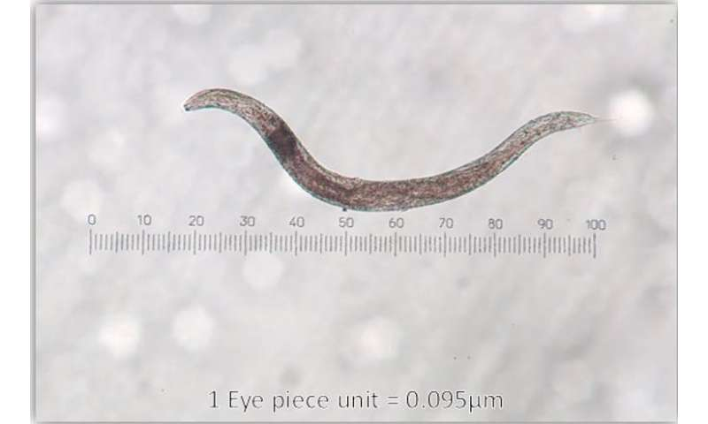 Why zombie slugs could be the answer to gardeners' woes