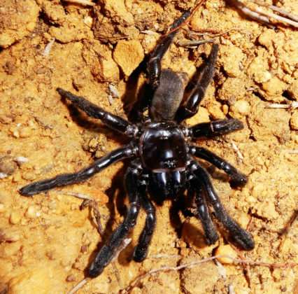 World's oldest spider discovered in Australian outback