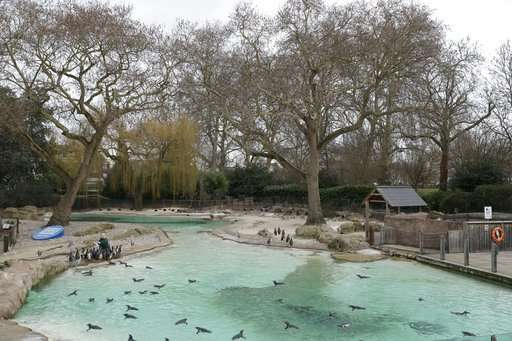 From aardvarks to zebras: London Zoo counts its creatures