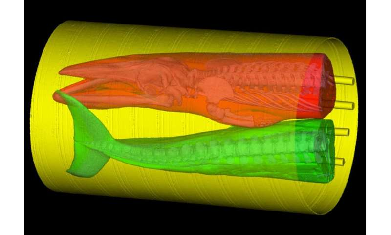 Scientists use rocket scanner to learn how whales hear