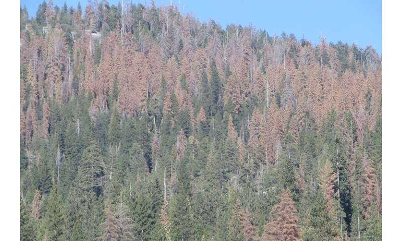 100 million dead trees in the Sierra are a massive risk for unpredictable wildfires