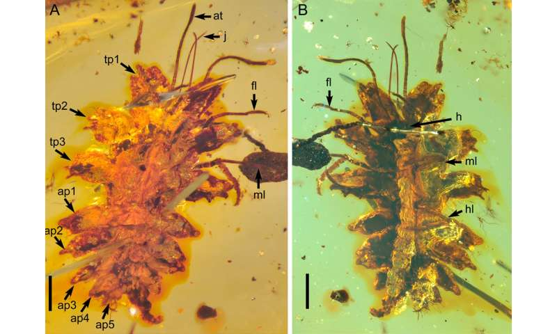 100-million-year-old liverwort mimicry in insects