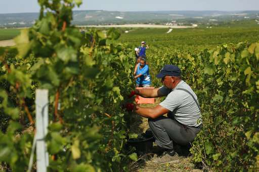 Champagne trying to defeat heat amid another early harvest