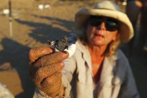 Endangered Green, Loggerhead turtles make comeback in Cyprus