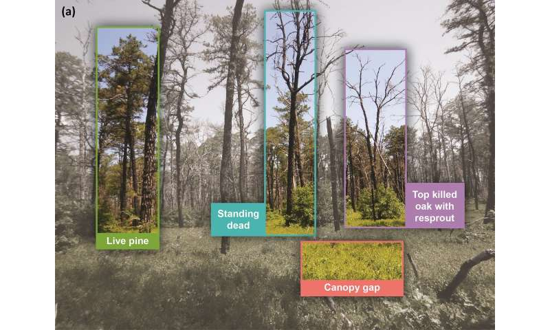 New technique reveals details of forest fire recovery