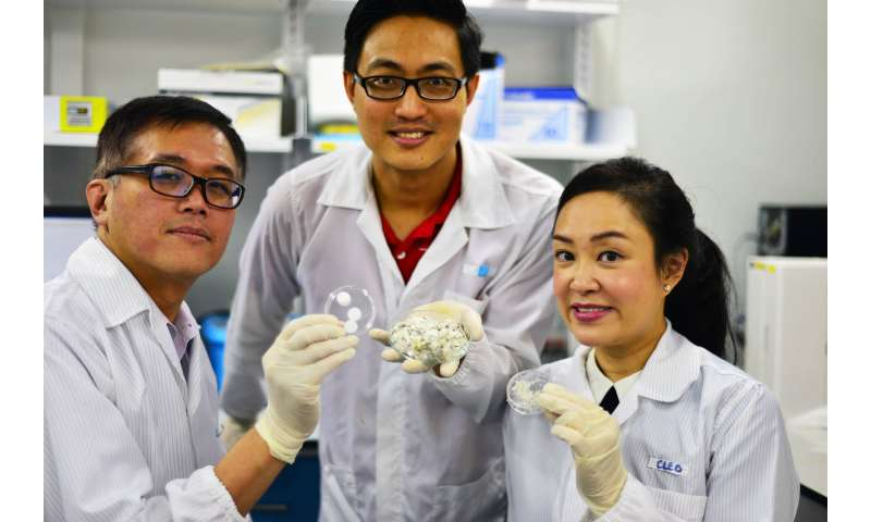 Scientists discover fish scale-derived collagen effective for healing wounds