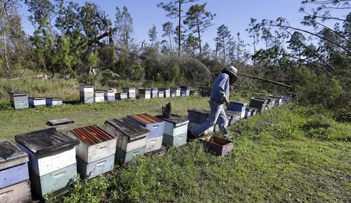 Hurricane Michael could sour Florida's tupelo honey harvest