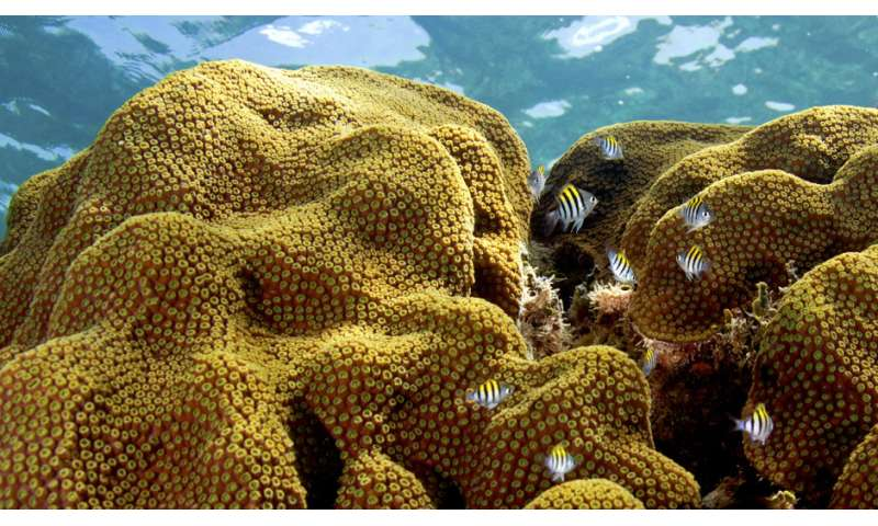 New study shows some corals might adapt to climate changes