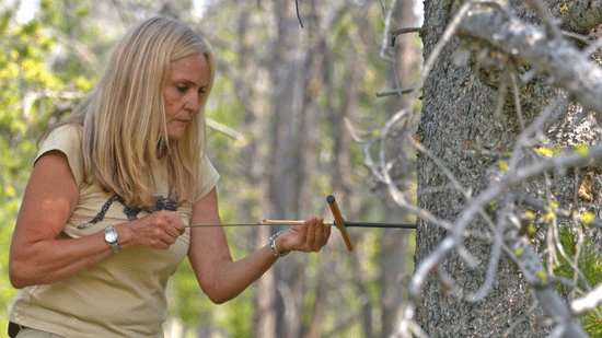 Researcher discovers genetic differences in trees untouched by mountain pine beetles