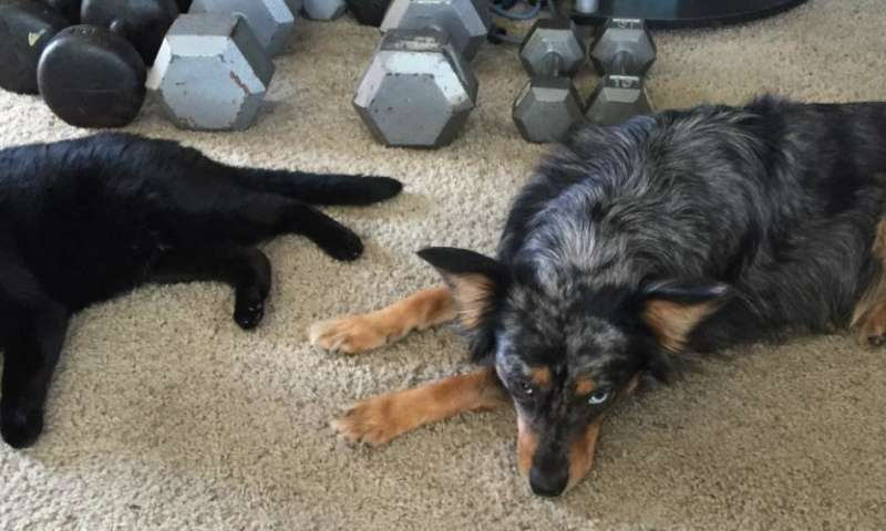 Research shows dogs prefer to eat fat, and cats surprisingly tend toward carbs