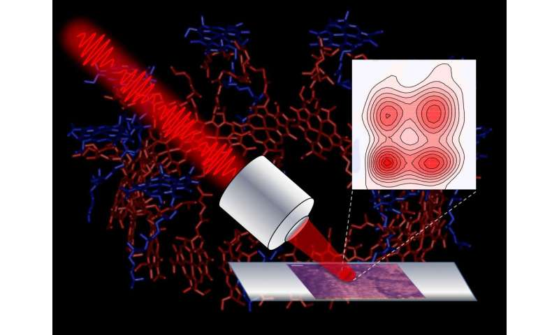 **Researchers develop microscope to track light energy flow in photosynthetic cells