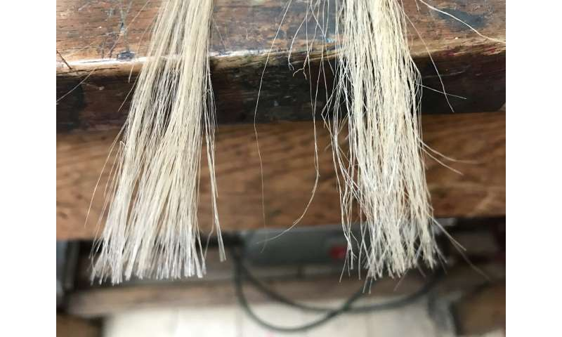Adding graphene to jute fibres could give natural alternative to man-made materials