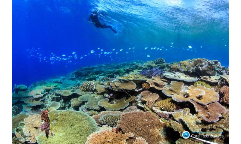 A Glimmer Of Hope For The World S Coral Reefs
