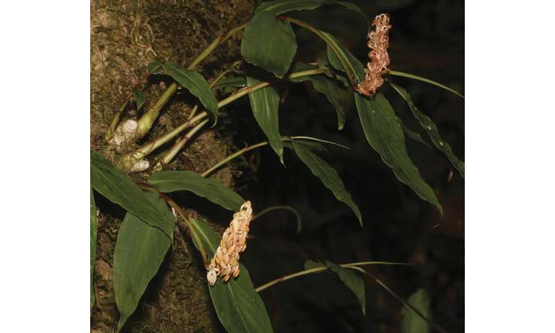A glimpse in the flora of Southeast Asia puts a spotlight on its conservation