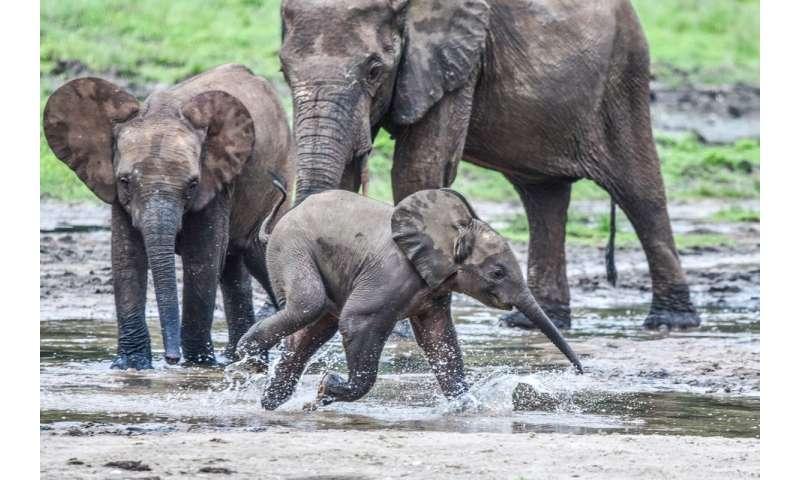 AI speeds effort to protect endangered elephants