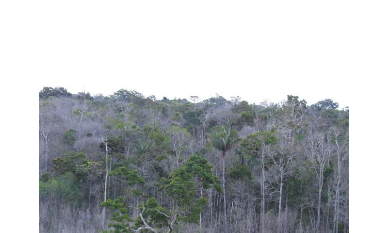 Amazon forests failing to keep up with climate change