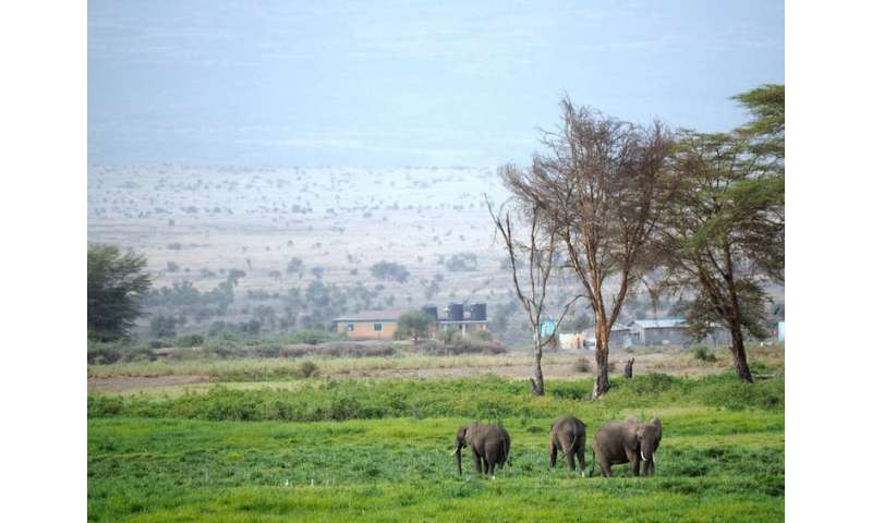 Are electric fences really the best way to solve human-elephant land conflicts?