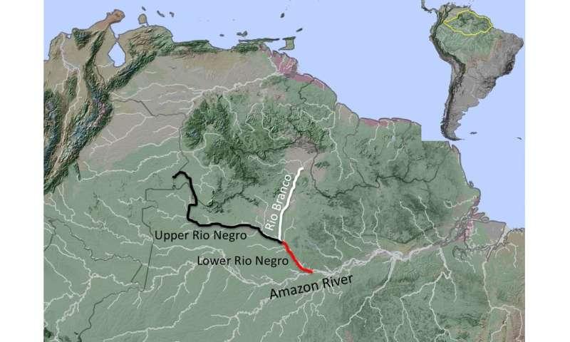 Bird DNA helps explain Amazonian rivers' role inevolution