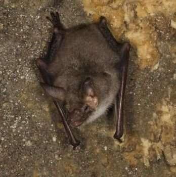 British mammals' fight for survival