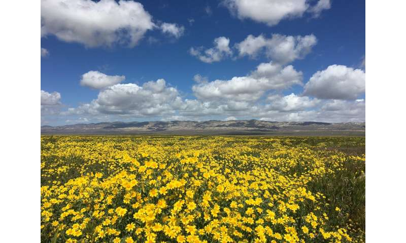 California plain shows surprising winners and losers from prolonged drought