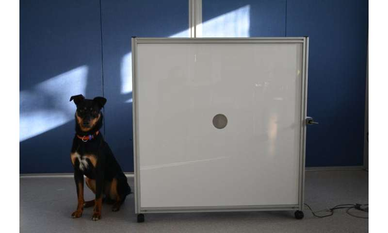 Dogs' sensitive noses may be the key to early detection of lung cancer