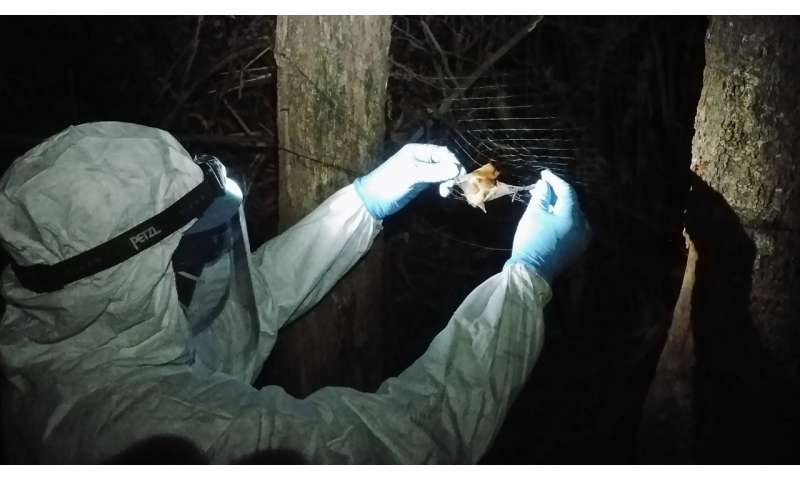 Ebola species found in bats ahead of any potential outbreak