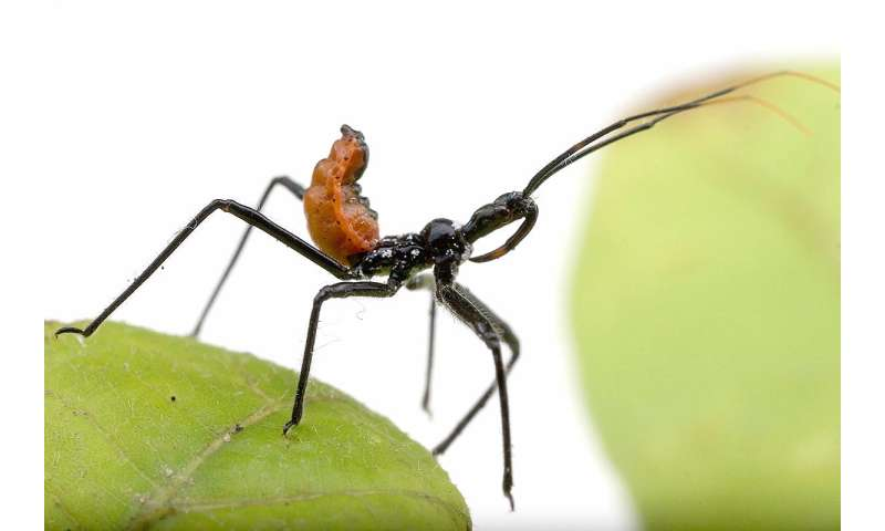 Effort clarifies major branch of insect tree of life