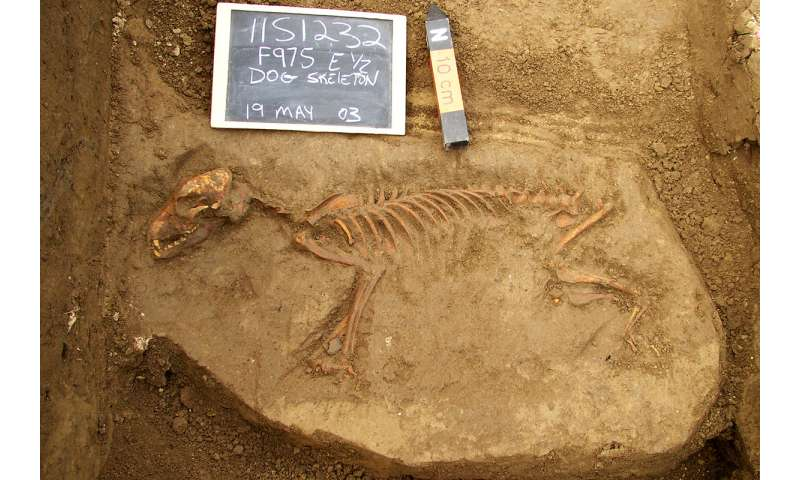 First dogs in the Americas arrived from Siberia, disappeared after European contact