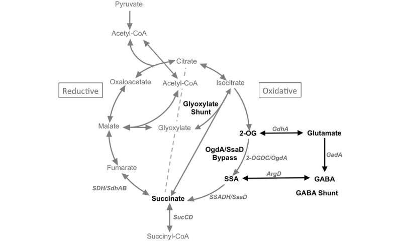 Gaba, gaba, gaba, what does it actually do in the brain?