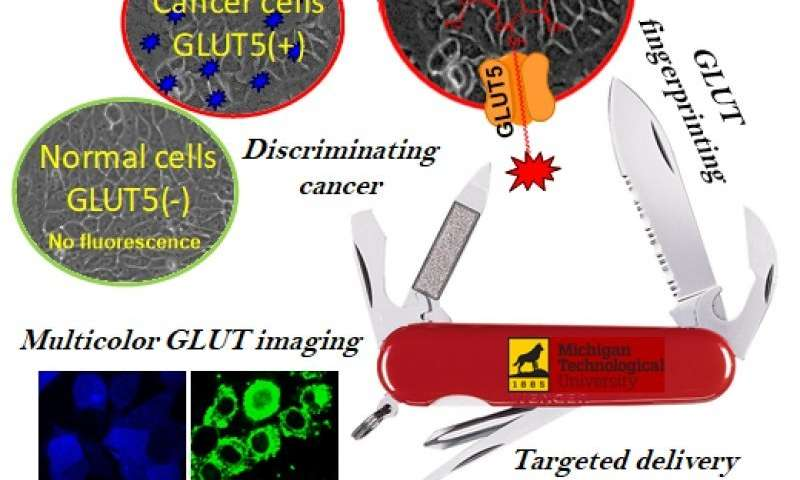 GLUT5 fluorescent probe fingerprints cancer cells