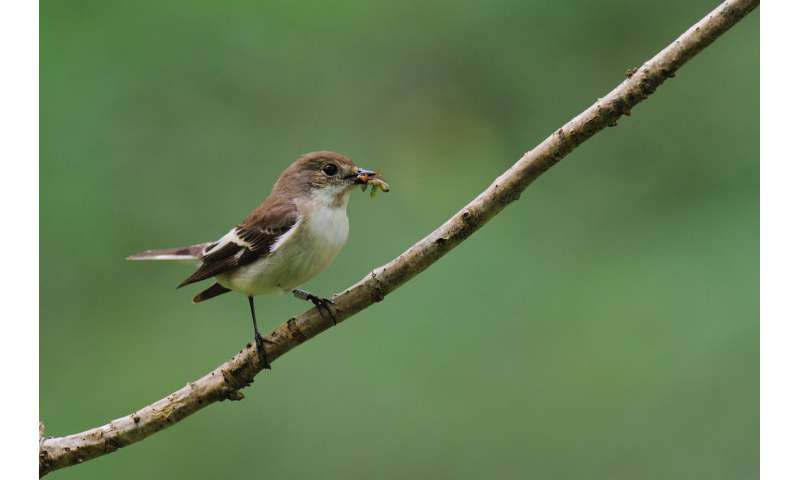 Hungry birds as climate change drives food 'mismatch'