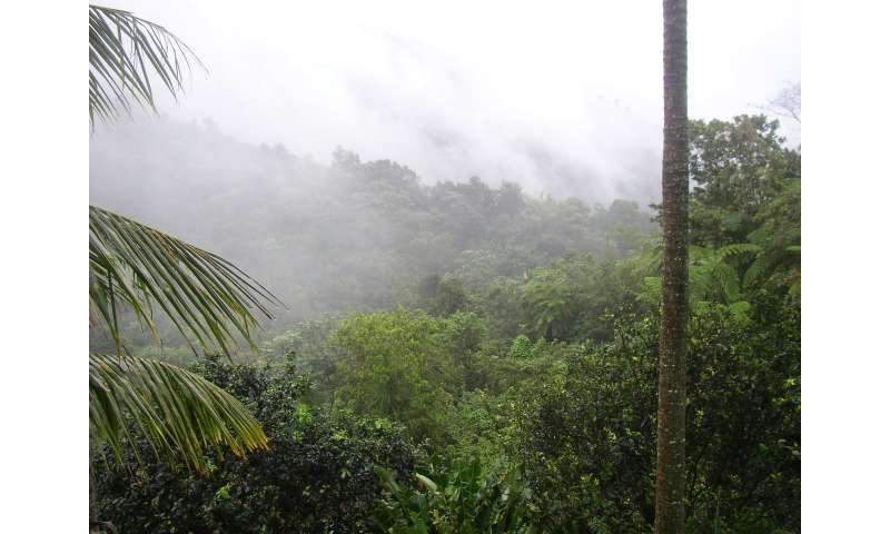 Hurricanes may lead to resilience—good news follows bad for Puerto Rico's tropical forests