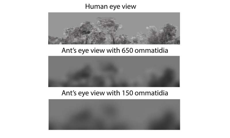 In an ant's world, the smaller you are, the harder it is to see obstacles