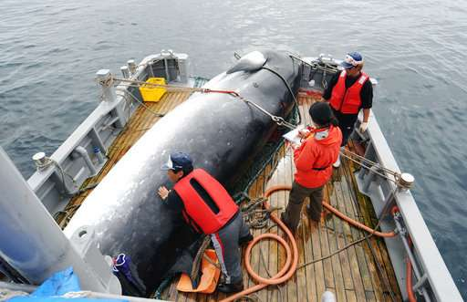 Japan will resume commercial whaling, but not in Antarctic