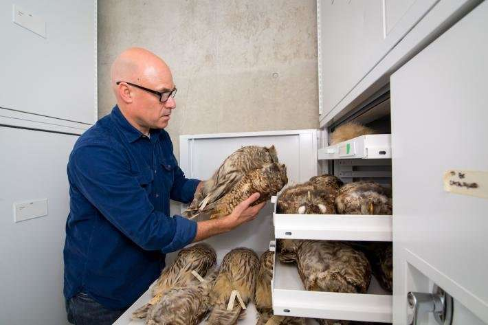 Marijuana farms expose spotted owls to rat poison in Northwest California