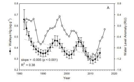 Mercury levels in fish fluctuate along with water levels in lakes