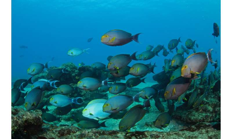 New application for acoustics helps estimate marine life populations