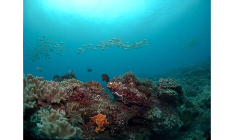 New research in Kenya finds sweet spot for harvesting reef fish
