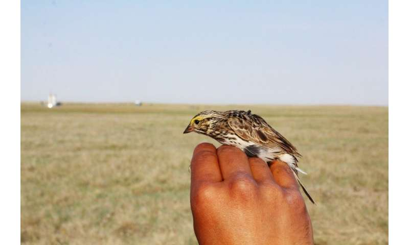 Noise pollution forces Canadian songbirds to change their tunes