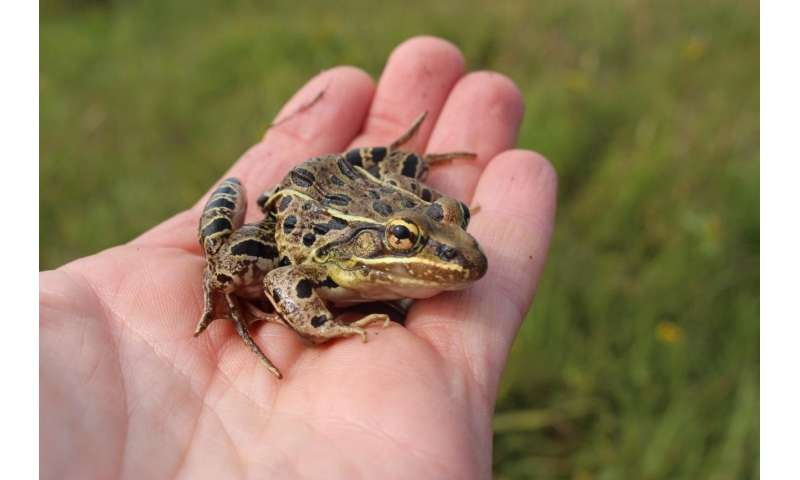 'Old-fashioned fieldwork' puts new frog species on the map