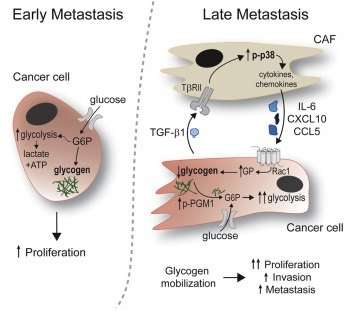 Blocking Glycogen A Key Energy Source Could Slow Or Prevent Ovarian Cancer Spread